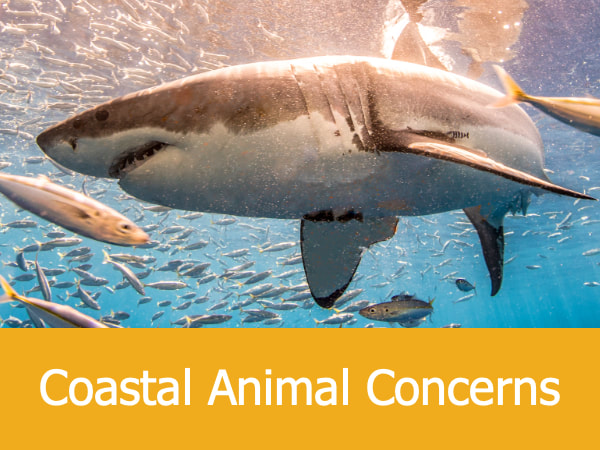 Coastal Animal Concerns