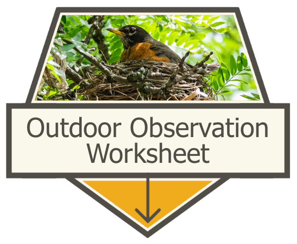Outdoor Observation Worksheet