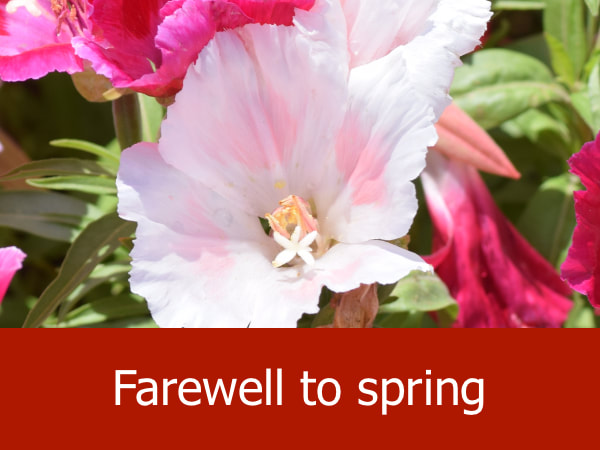 Farewell to Spring