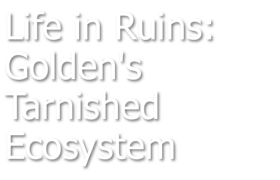 Life in Ruins: Golden's Tarnished Ecosystem