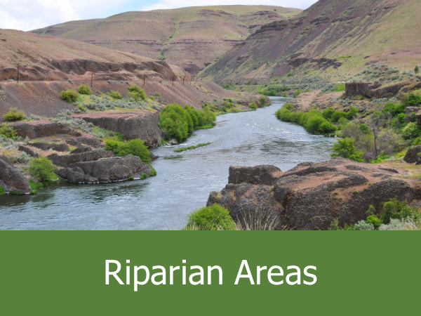 Riparian Areas