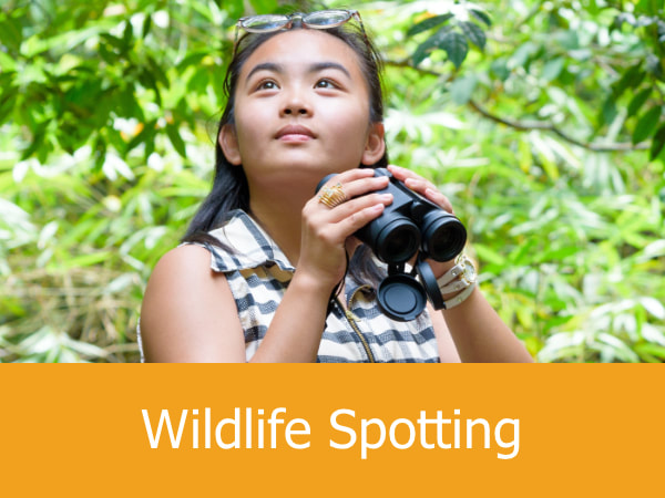 Wildlife Spotting